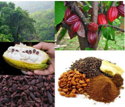what is in chocolate vegan shakeology