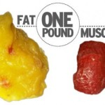 Does Muscle Turn To Fat